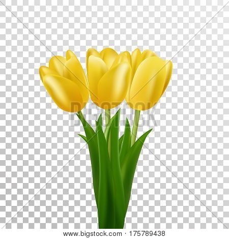 Tulips. Yellow vector tulips bouquet isolated. Flowers in different shapes.