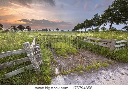 Gate To Meadow Decorated With Cow Parsley Flower