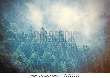 Photo Of The Beautiful Fur Tree Forest In Cool Close Up From Sky