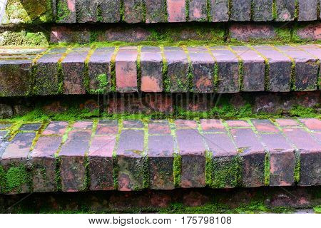 Brick Footsteps With Green Moister Moss In The Shade