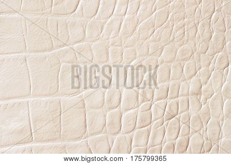 Cream scales macro exotic background, embossed under the skin of a reptile, crocodile. Texture genuine leather close-up, light tones, fashion trend. For backdrop, substrate, composition use. With place for your text