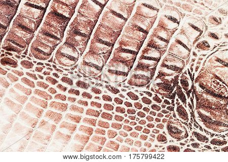Brown scales macro exotic background, embossed under the skin of a reptile, crocodile. Texture genuine leather close-up, cognac tones, fashion trend. For backdrop, substrate, composition use. With place for your text