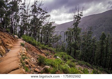 Hiking Trail in the Wilsons Promontory National Park, Victoria, Australia