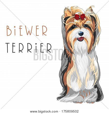 Cute funny dog Biewer Yorkshire Terrier breed sitting vector