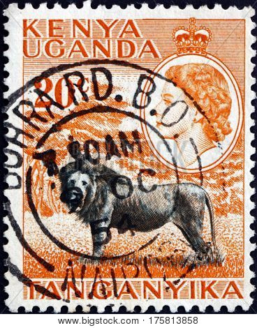 EAST AFRICAN POSTAL UNION - CIRCA 1954: a stamp printed in the East African Postal Union (Kenya Uganda Tanganyika) shows Lion panthera leo animal circa 1954
