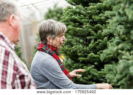 Family selecting a tree for Christmas at the Christmas tree farm.