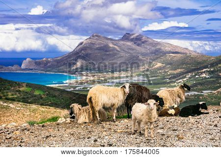 Beauty of Greece. Landscapes of Crete island.