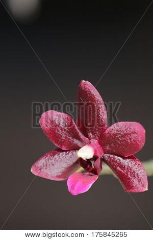 Of priod, plants, flora, flowers, orchids, Pets, flowers, beauty, Orchidáceae, monocots, Phalaenopsis