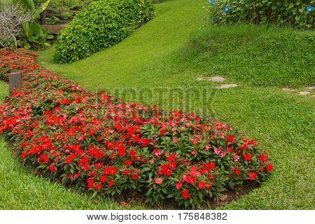 Colorful Of Petunia Flowers In Beautiful Garden