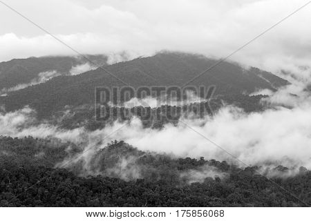Morning fog in dense tropical rainforest, kaeng krachan, thailand.