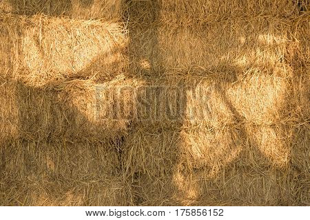 Dry yellow hay farm closeup texture Background