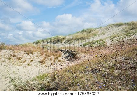 Sand And Dry Grass Of Dunes At National Park Of Curonian Spit, Lithuania On Cloudy Day.
