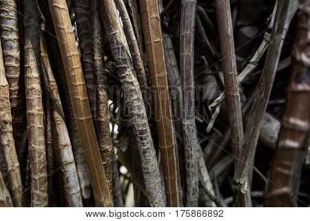 Close-up of aerial roots background a brown natural texture.