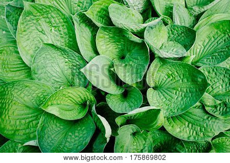 Photo of close up plant leaf background