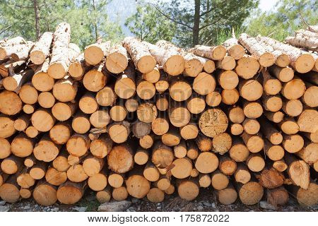 Wooden Logs with Forest on Background / Trunks of trees cut and stacked in the foreground green forest in the background with sun rays