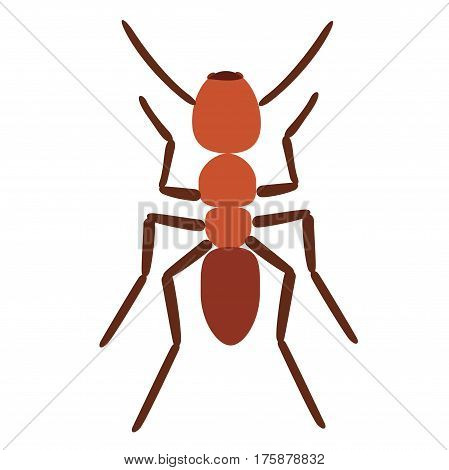 Ant vector illustration, ant isolated on white background. Vector illustration