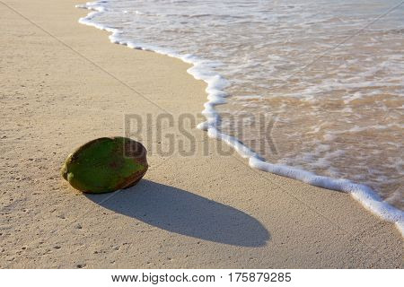 Beautiful Caribbean sea and coconut. Beach of caribbean sea .
