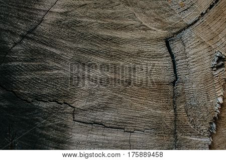 Tree trunk background and texture. Wood texture of cut tree trunk. Closeup view of old wood texture. Abstract texture and background for designers. wooden background.