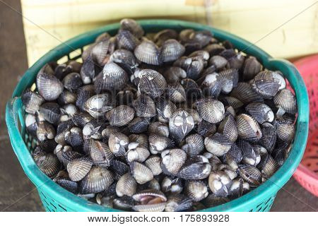 Heap Of Mollusks In Seafood Market