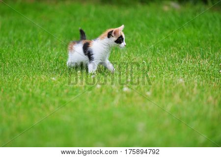 Motley cute cat playing on green grass