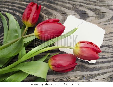 Beautiful blossoming tulip flower with place for text. Floral design. Nature background. Spring background with beautiful fresh flowers on wooden background.