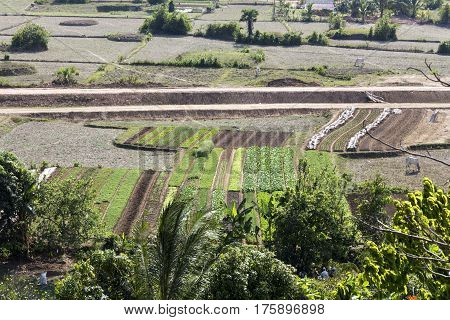 Wide agriculture area at Ninh Binh countryside Vietnam on day new crop for spring flower field and vegetable farm Viet Nam