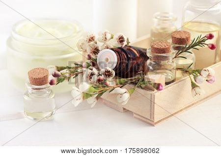 Little apothecary glass vials with aroma essential oil in wooden box, beautiful tiny blossom, close-up dropper bottle. Herbal cosmetic skincare.