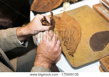Traditional manufacture of cigars at the cuban tobacco factory. Closeup of old hands making a cigar from tobacco leaves in a traditional cigar manufacture. smoking concept, unhalthy