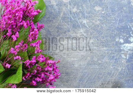 Dried flowers called broom bloom or bloom weed in pink on a rustic background