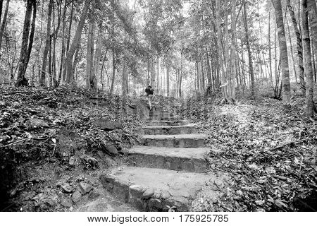 Rear view of young male hiking in forest; Koh Pha Ngan; Thailand