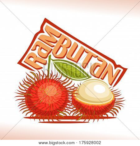 Vector logo Rambutan Fruit: still life composition of 2 red fresh malaysian rambutans, whole peeled exotic fruit, abstract icon asian berry with title text for label isolated on white, vegetarian food