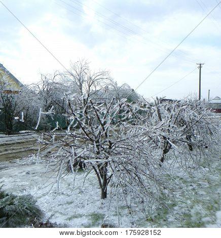 Молодая вишенка нарядилась ранним зимним утром в новый серебряный, ледяной наряд