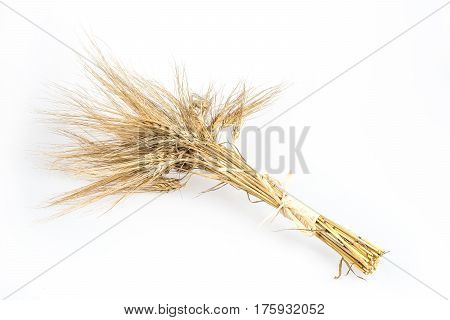 Barley bunch isolated on white background. Grain bouquet golden spikelets.