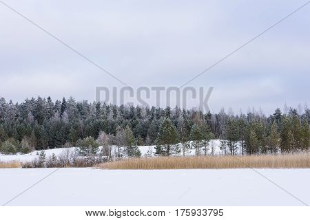 Winter in the lake. Icy cold forest. Frosty wood and ground. Freeze temperatures in nature. Snowy natural environment. Trees reed snow and blue sky.