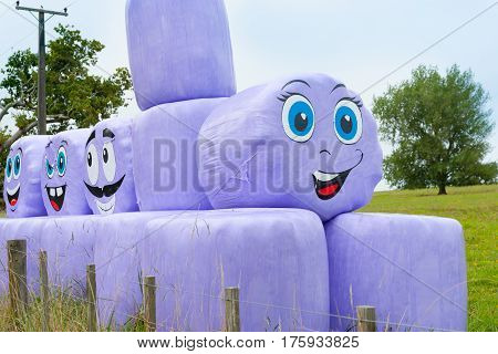 Purple plastic wrapped hay bales with funny face