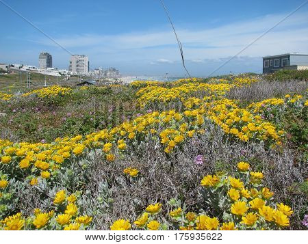 LANDSCAPE, WITH YELLOW FLOWERS IN FORE GROUND  AND HIGH RISE BUILDINGS IN THE BACK GROUND 15ssd
