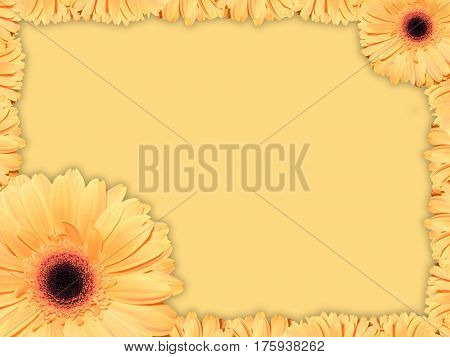 Beautiful greeting card with orange transvaal daisy on a yellow background