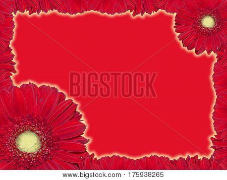 Greeting card with red transvaal daisy on a red background