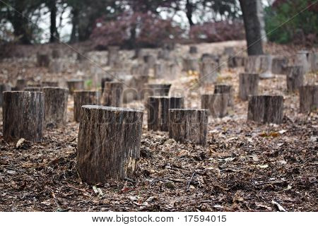 Many stumps in autumn forest