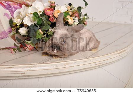 Gray cute rabbit rabbit rabbit hare with flowers