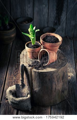 Repotting Green Plants And Old Gardening Tools