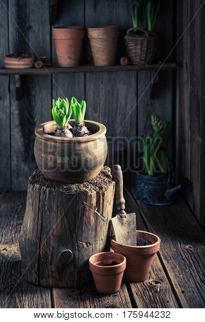 Planting Green Plants In An Old Wooden Workshop