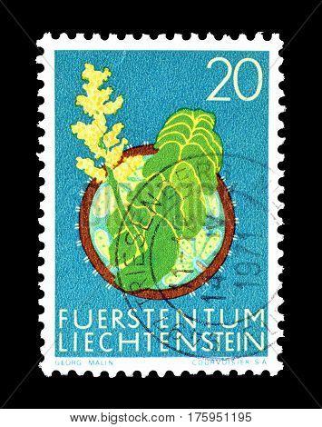 LIECHTENSTEIN - CIRCA 1971 :  Cancelled postage stamp printed by Liechtenstein, that shows Moonwort.
