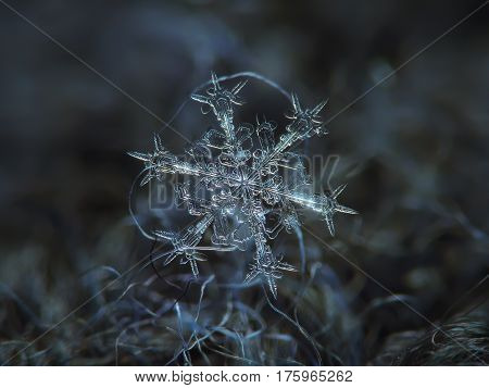 Macro photo of real snowflake: large snow crystal of stellar dendrite type with six long, ornate arms, fine symmetry and elegant structure, glowing on dark gray wool fabric in diffused light of cloudy sky.
