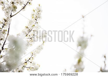 Beautiful Blossoming Flowers On A Tree