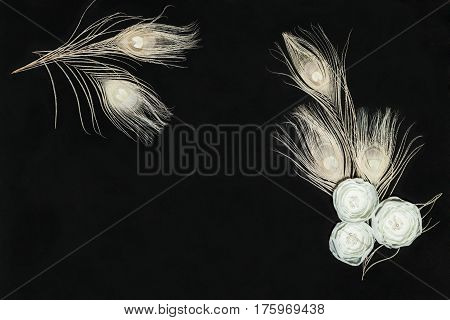 Black Dark Rectangular Horizontal Composition With Handmade Gentle White Ranunculus Flowers and Peacock Feathers Lying Flat Top View. Have an Empty Place For Your Text.