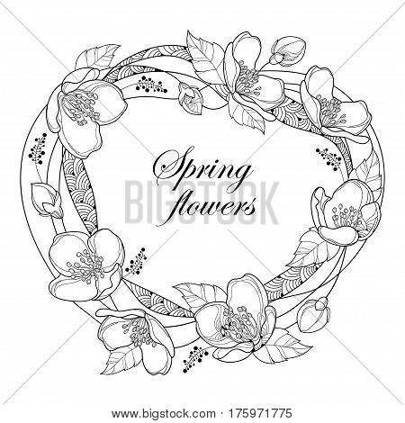 Vector round frame with outline Jasmine flowers, bud and leaves isolated on white background. Floral elements for spring design and coloring book. Ornate jasmine flower in contour or line art style.