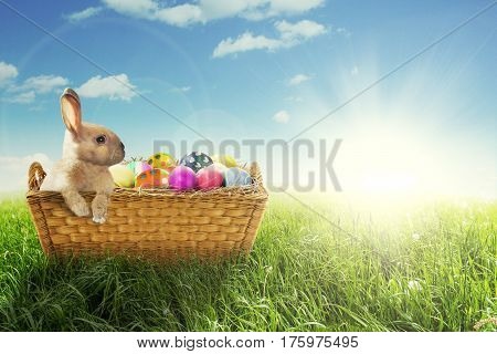 Picture of cute Easter bunny with colorful Easter eggs in the basket with a sunbeam on the sky