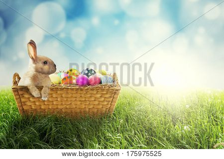 Picture of Easter bunny with colorful Easter eggs in the basket shot with a light glitter background