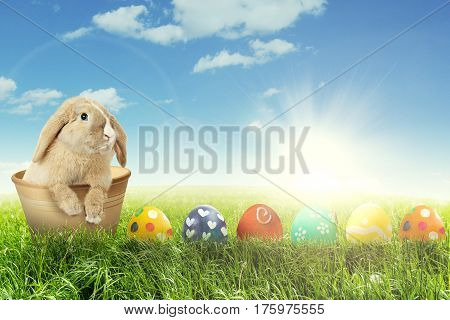 Image of Easter bunny with row of colorful Easter eggs on the meadow